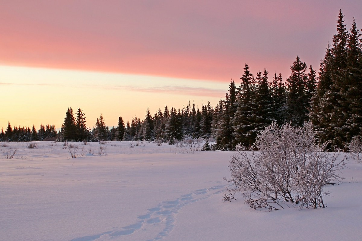 Sunset in snowy forest
