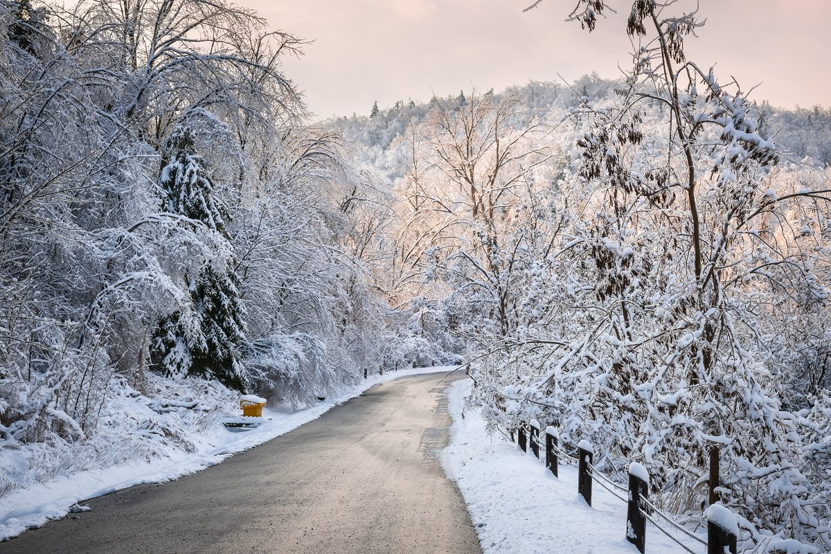 Forest road in the winter