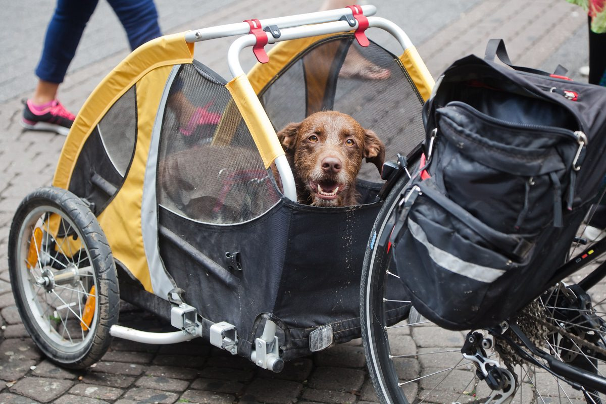 Dog trailer with dog
