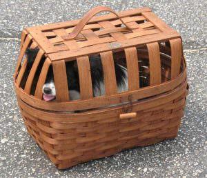 Wicker bike basket for a dog