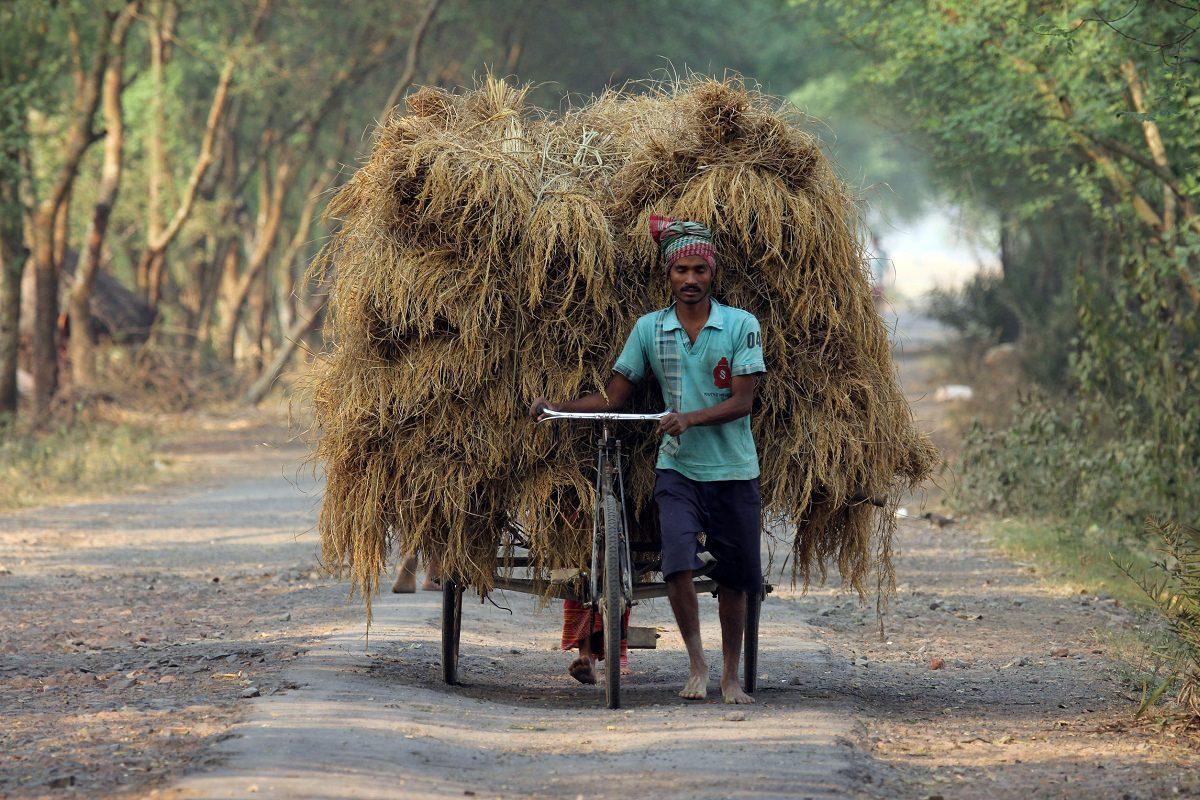 Richshaw rider transporting rice