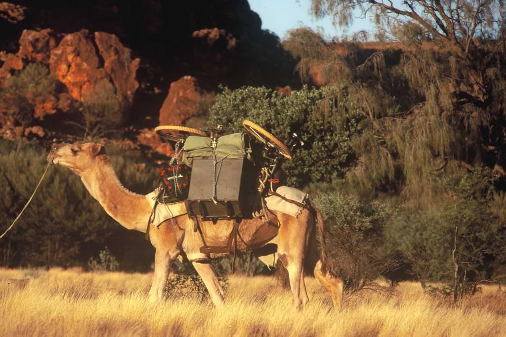 Bike on a camel