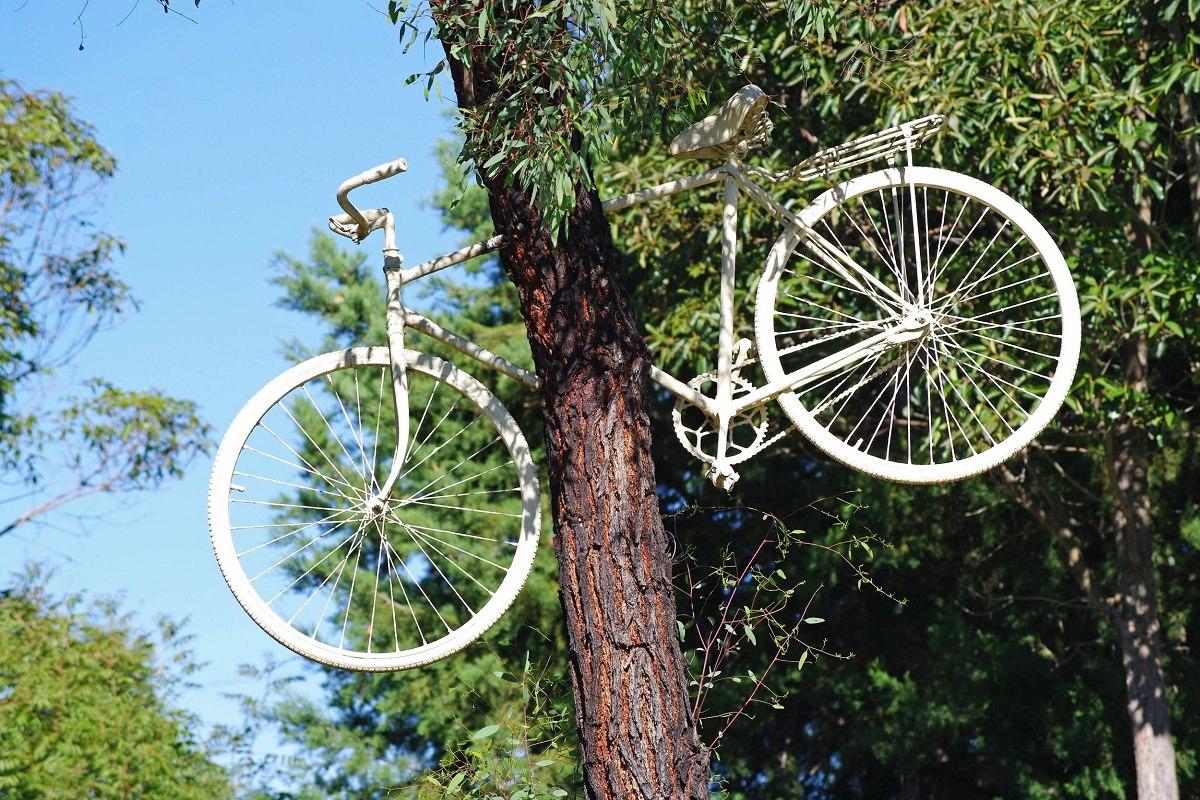 White bike stuck in a tree