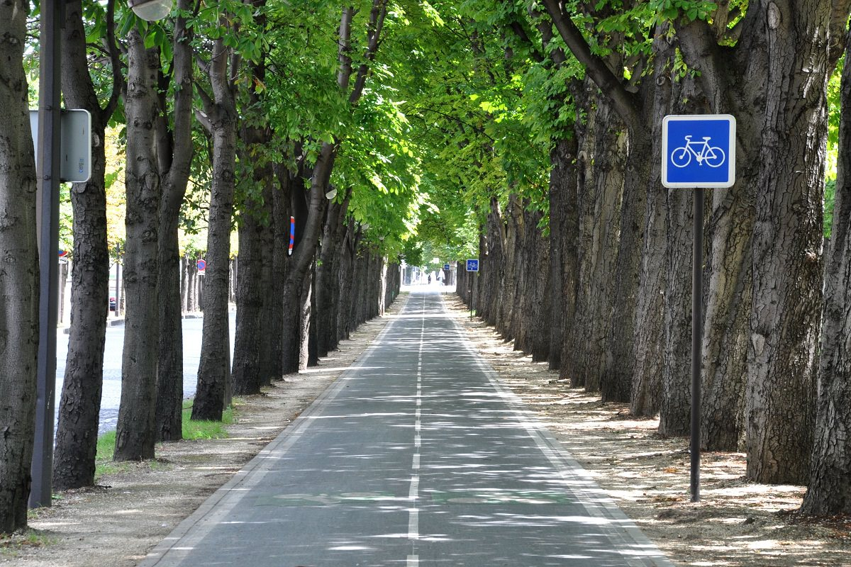 Nice bike lane with trees