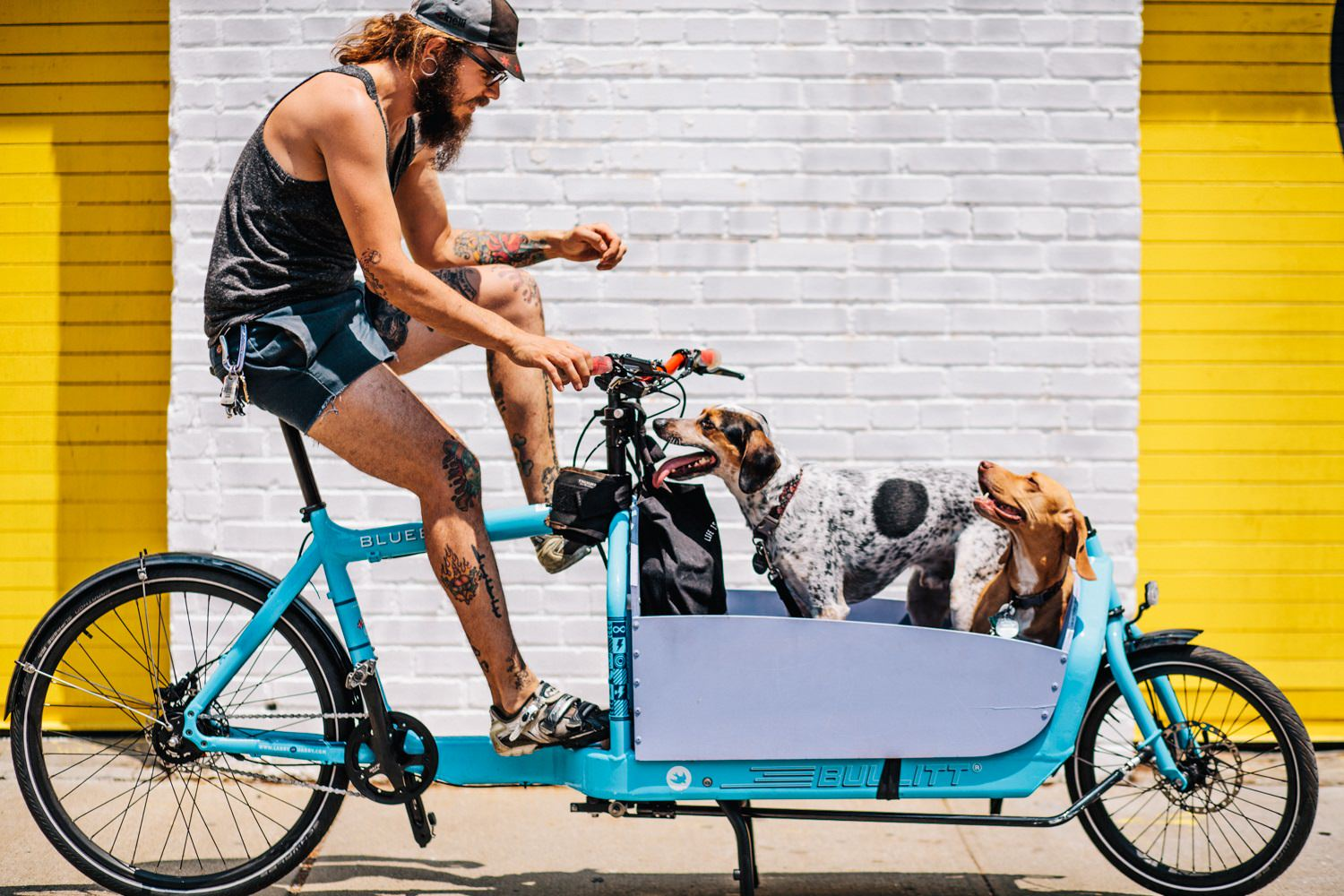 Cargo bike with dogs in