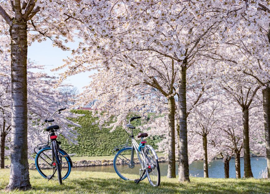 Bicycles In Maruyama Park